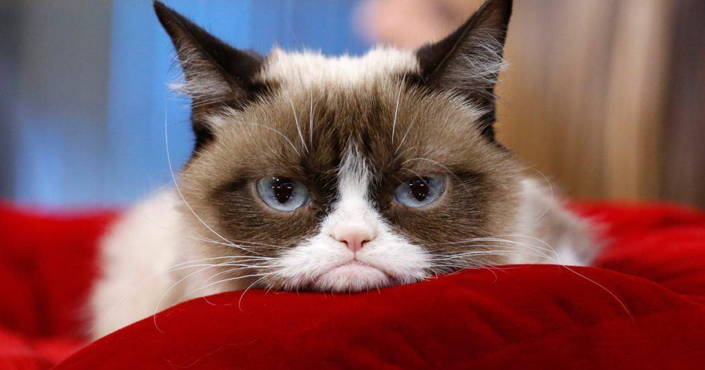 635992707959380360-1327033223_08-grumpy-cat-w1200-h630