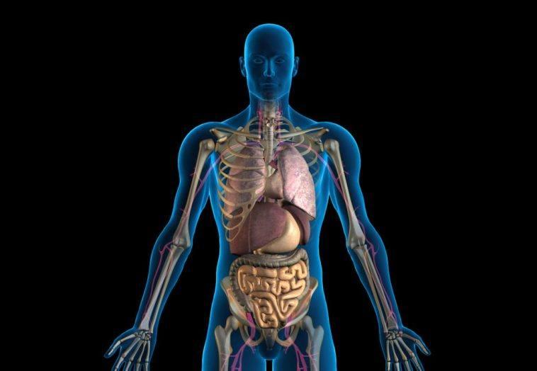 Warum sind menschliche Körper asymmetrisch? – Blinx!